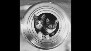 A Short History of Ships Cats  Floating Felines, Maritime Moggies and Kleptomaniac Kittens