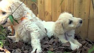 Doggies Day