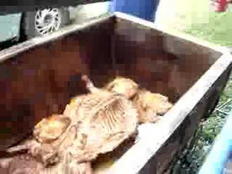 cabrito y pollo al ataud youtube