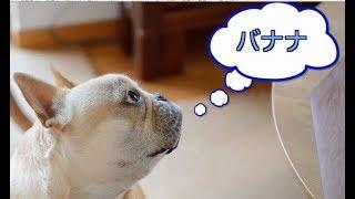 朝のいつもの時間 Frenchbulldog Fuku インスタグラム→https://www.inst...