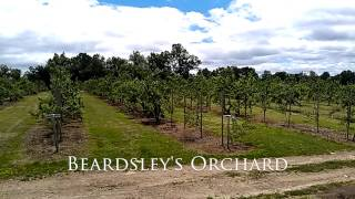 Shelton, CT - Beardsley's Orchard