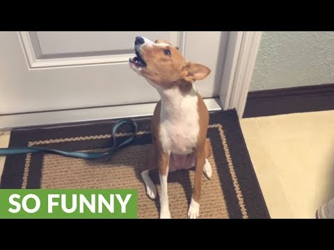 Vocal dog sure has a lot to say