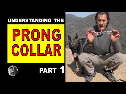 PRONG Collar Explained #1- How to Use a Prong Collar - Robert Cabral - Dog Training Video