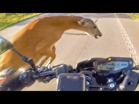ANIMALS VS BIKERS - THE FUNNY, CRAZY & SCARY