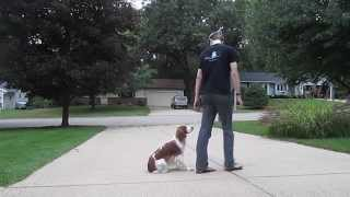 Obedience Training Practice With Lily 9-28-2015 | Matt Hendricks | Follow The Leader Dog Training