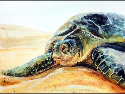 Green Sea Turtle in Watercolors Painting Demonstration