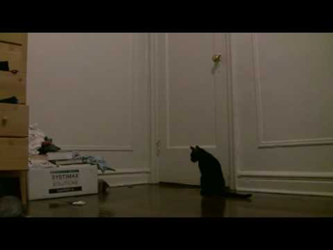 Cat escapes from room :(