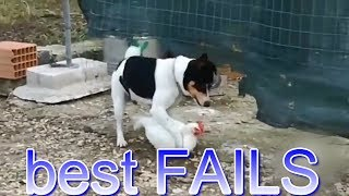 (best FAILS)-как правильно отжарить курицу(18+)