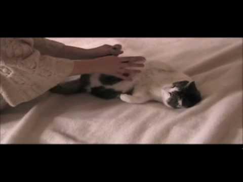 Wild Kitty Movie