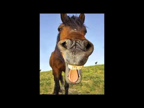 horse sound effects - efek suara kuda