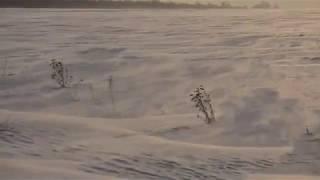 Снежная поземка в зимнем поле