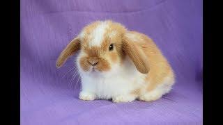 Декоративные кролики.  Купить в питомнике. Выбор в Зайкиной усадьбе. Видео.