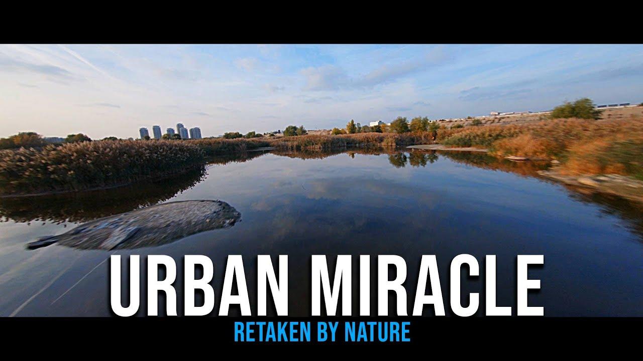 Urban WildLife Miracle (Cinematic FPV)