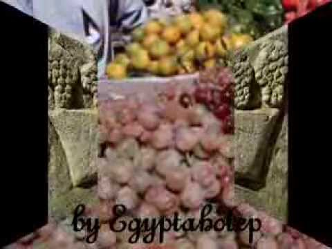 EGYPT 444 - EGYPTIAN GRAPES - (by Egyptahotep)