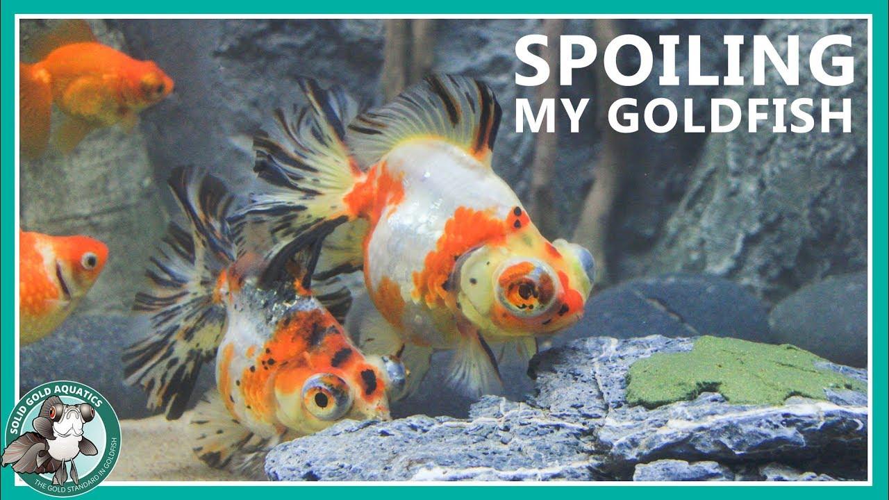 homemade-algae-for-my-goldfish-to-eat