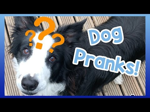 Tricks to Play on Your Dog! Fun Tricks and Pranks You Can Play on Your Dog!
