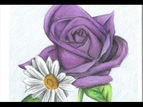 how to draw a purple rose