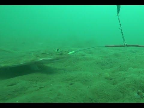 Первый выход на камбалу 2019 Подводная камера WiFi кабель 25 м Flounder 2019  Underwater Camera