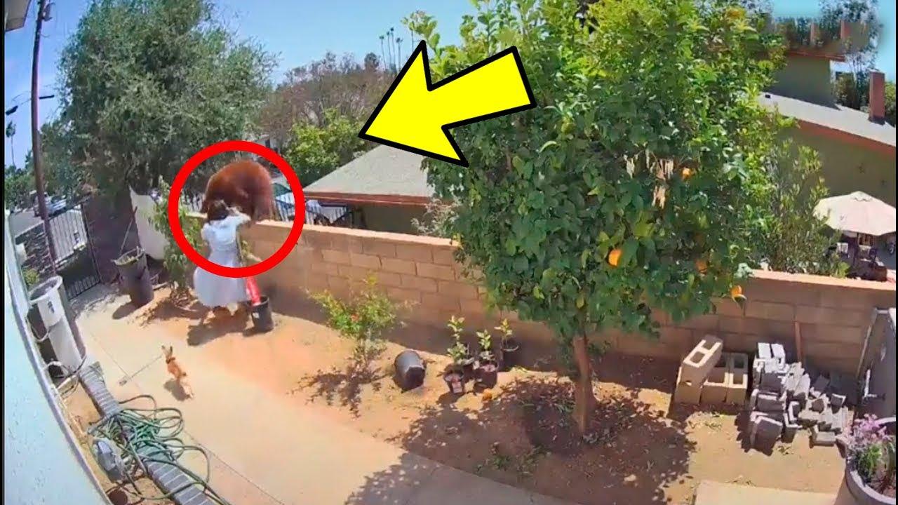 لن تصدق كيف واجهت الفتاة دبا شرسا من أجل إنقاذ كلابها 😲