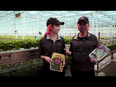 An Inside Look: Revol Greens Greenhouse
