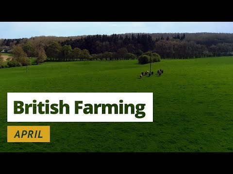 British Farming | 12 Months on a UK Farm: April