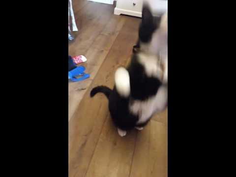 My tricks as a cat