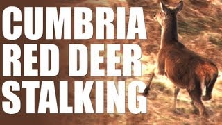 Red deer stalking in Cumbria