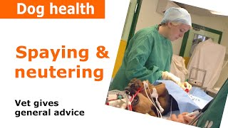 Dog Neutering, speying & castration - Vet Advice