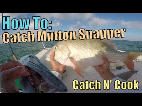 How to Catch MONSTER Mutton Snapper Fishing Key Largo | Catc