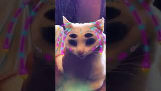 funny alien cat 🐈