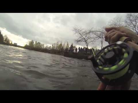 Whatcom Creek Chum Salmon Combat Fishing, WA