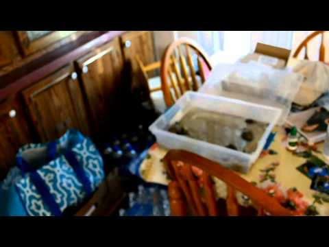 """JCSO video of Curtis """"Wayne"""" Wright's home"""