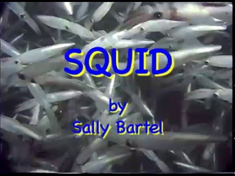Squid Life Cycle