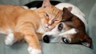 pet health questions are you asking these pet health questions