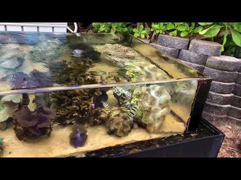 Red Sea Reefer Nano & Innovative Marine 10G and visit to Hawaii Waikiki Aquarium