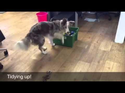 Useful dog tricks!