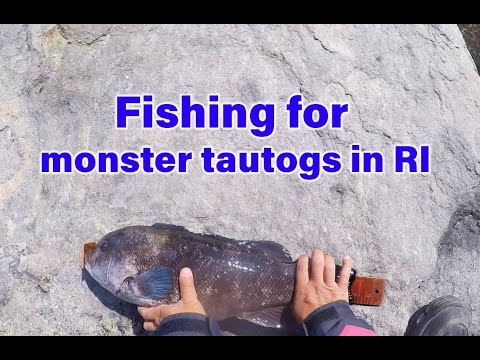 Fishing For Monster Tautogs From Shore In RI (Oct 2019)