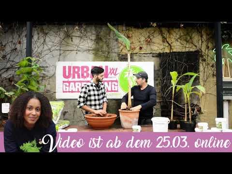 """urban-gardening:-""""richtig-umtopfen"""""""