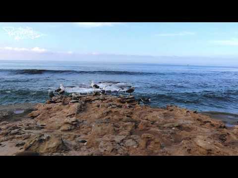 Bee Hunter - Blue Lagoon (Original Mix) [PMW003]