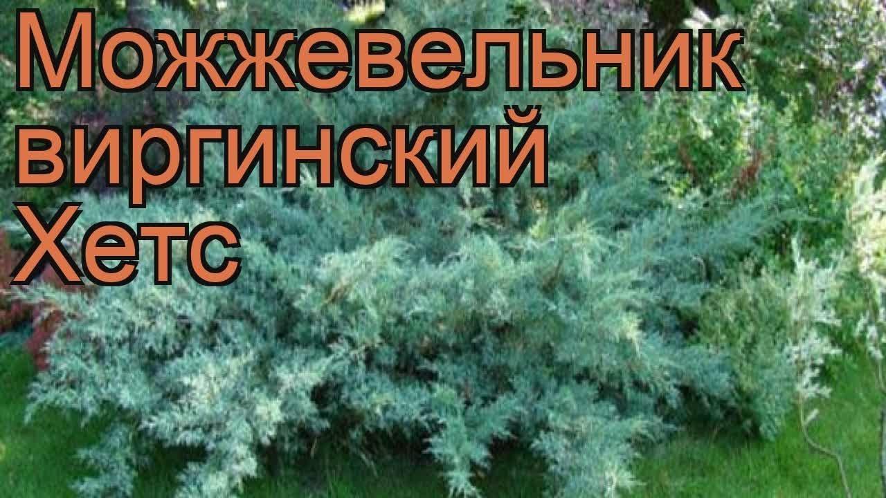 Рододендроны купить несложно, а вот купить качественные непросто. В питомнике растений южный все рододендроны с описаниями и.