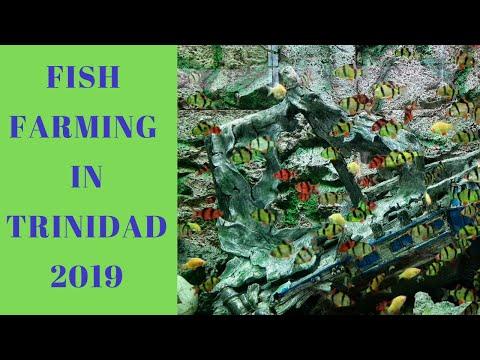 Fish Farming In Trinidad 2019 - Mausica Fish Farm