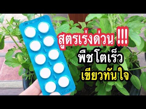 แค่โยน!! #สูตรเร่งด่วน พืชผักโตเร็วเขียวทันใจลืมแมลงไปเลย Aspirin hacks on plants แม่ก้อยพาทำ