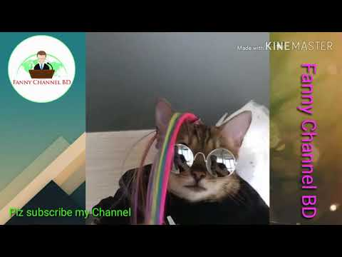 Funny Cats and Kittens Meowing Compilation 2019 Fanny Channel BD l