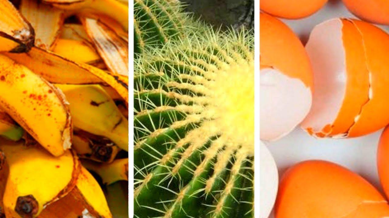 Fertilizante y Abono Casero Para Los Cactus - YouTube