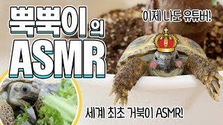 [몽토의 애니멀] 거북이 먹방이라니! 뿍뿍이의 치커리A…