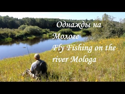 Однажды на Мологе // Fly fishing on the river Mologa