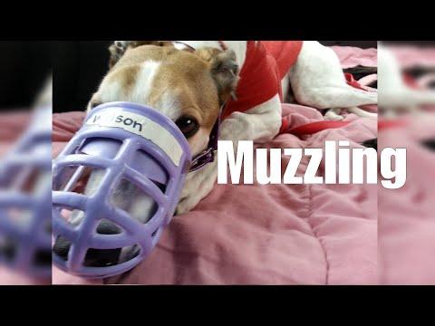 Muzzling
