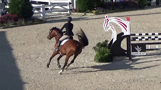 Lucy and J - Five year old jumpers Devon 2016 - Blue ribbon