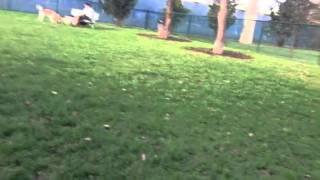 Min Pin Dog Park Miami