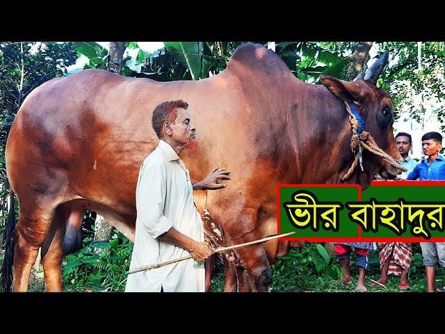 হাট কাপাবে কিশোরগঞ্জের ২৫লাখ টাকার গরু বীর বাহাদুর Bir bahadur cow kishorgonj